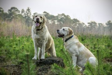 Kornfrit hundefoder fra Arion