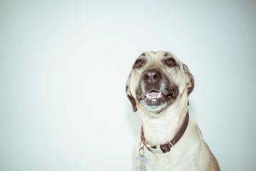 Rigtig hundemad uden overflødelige tilsætningsstoffer - høj kvalitet til en lav pris