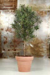 Kunstige oliventræer - for den ægte, sydlandske stemning