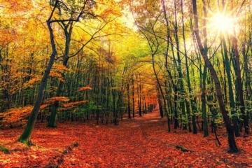 Byd en smuk skov indenfor med fototapet